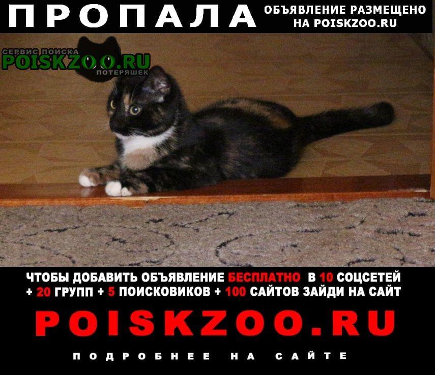 Пропала кошка маркиза трехцветная маленькая Петрозаводск