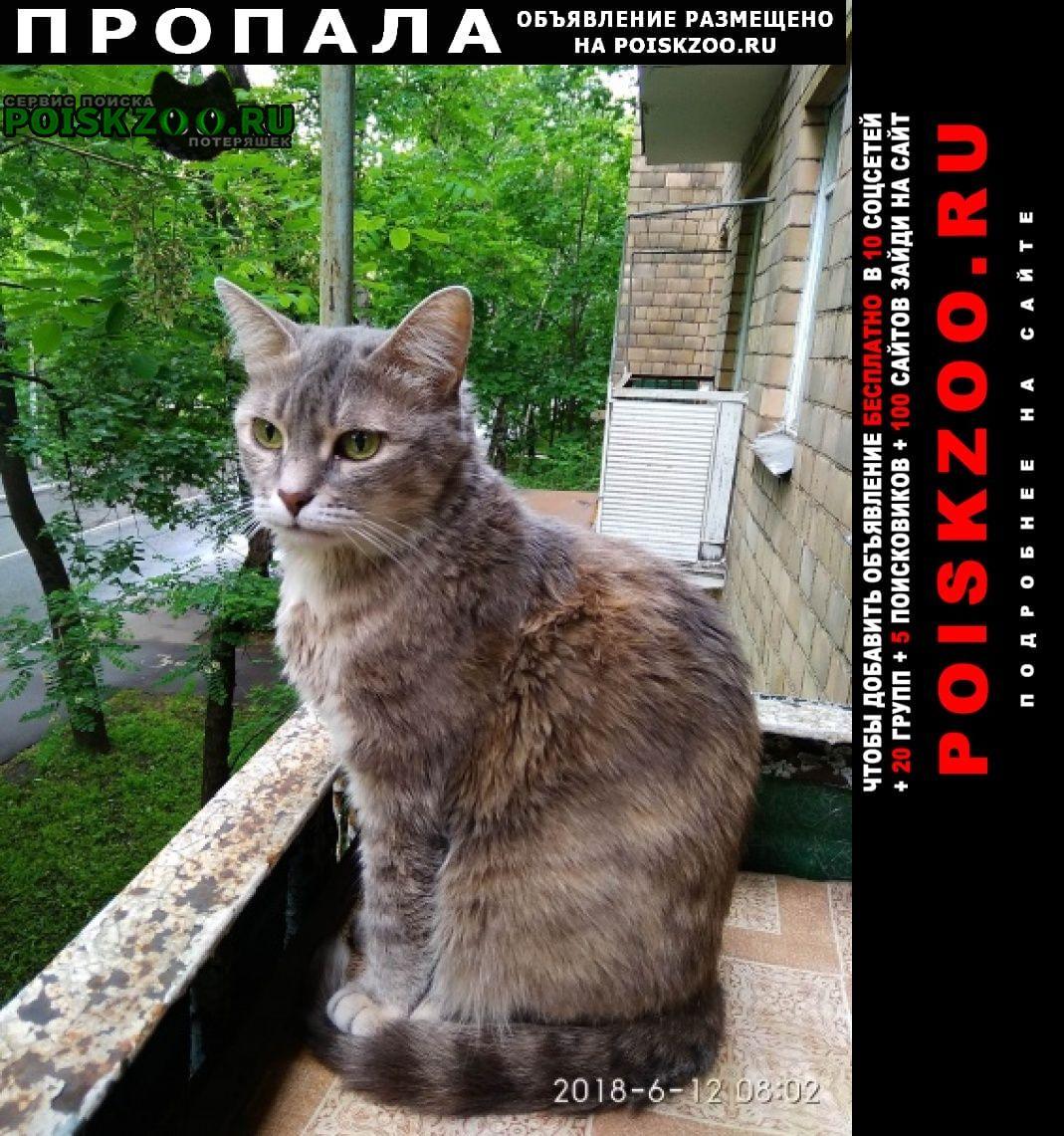 Пропала кошка бася москва Восточный