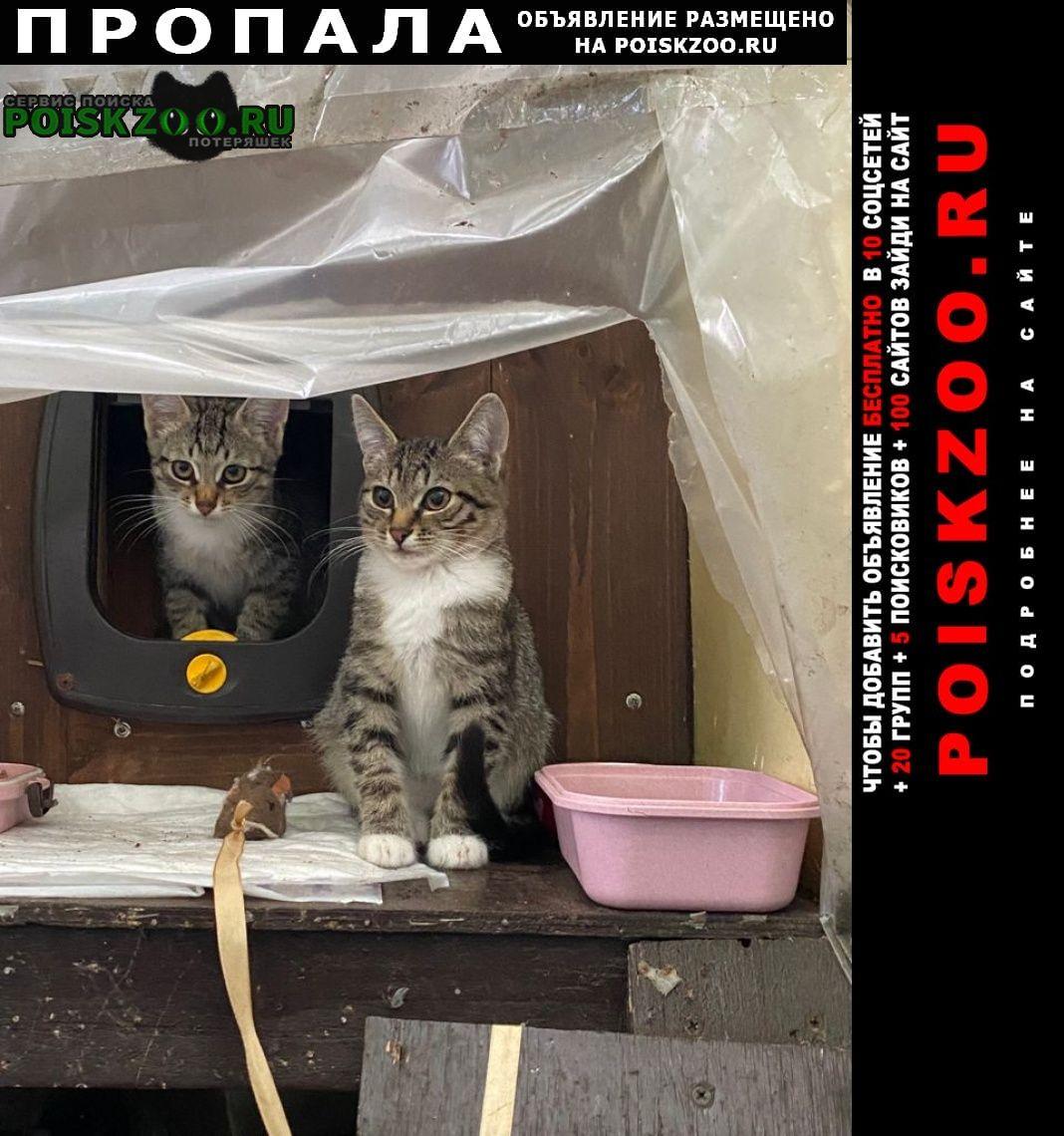 Москва Пропал кот
