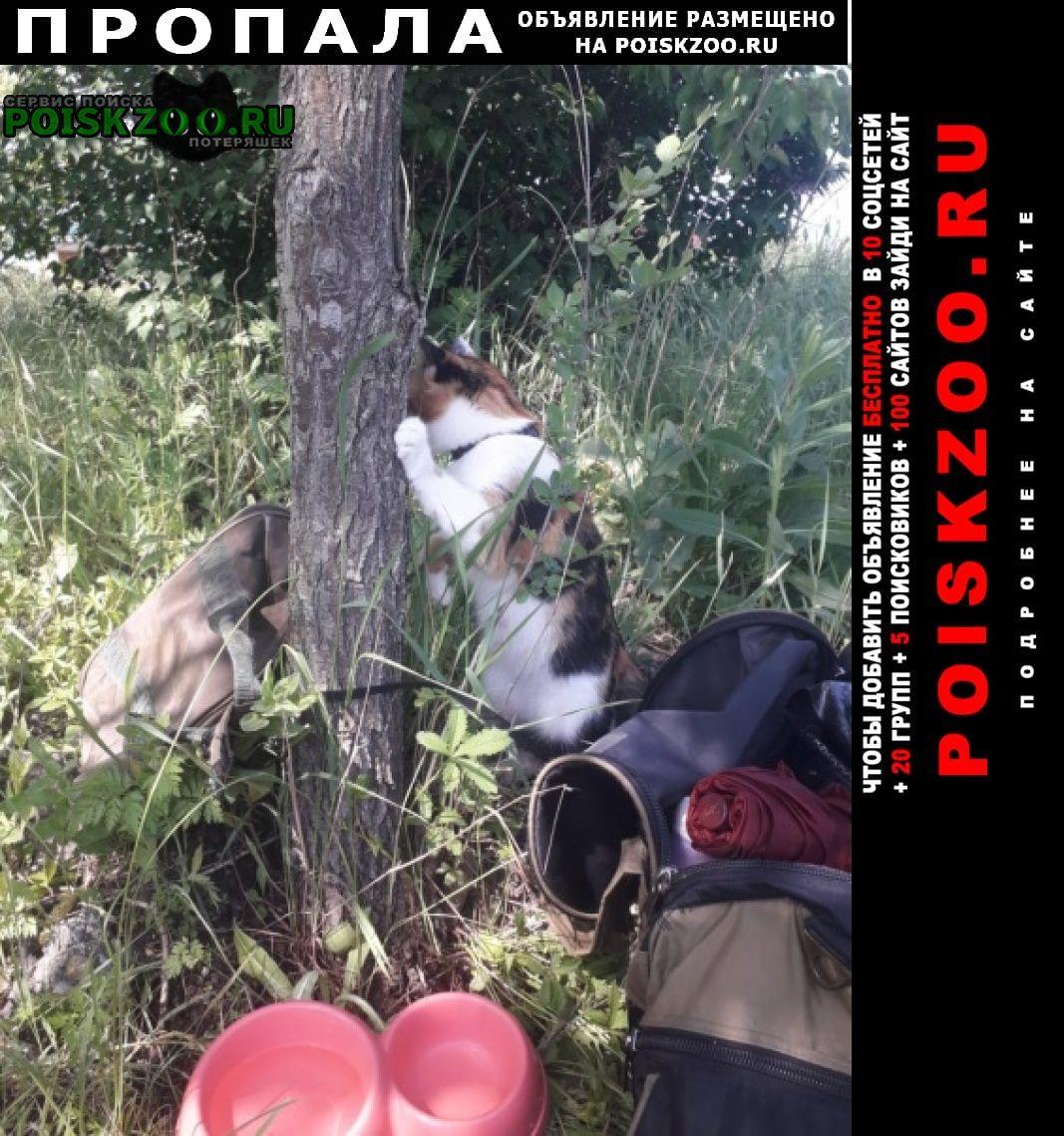 Пропала кошка на остановке ростовского моря Ростов-на-Дону