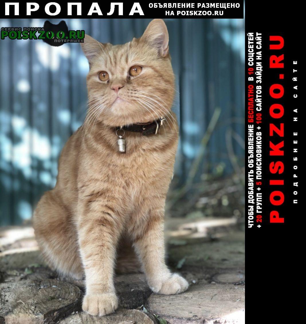 Пропала кошка прошу внимания  люди которые живут в  Солнечногорск