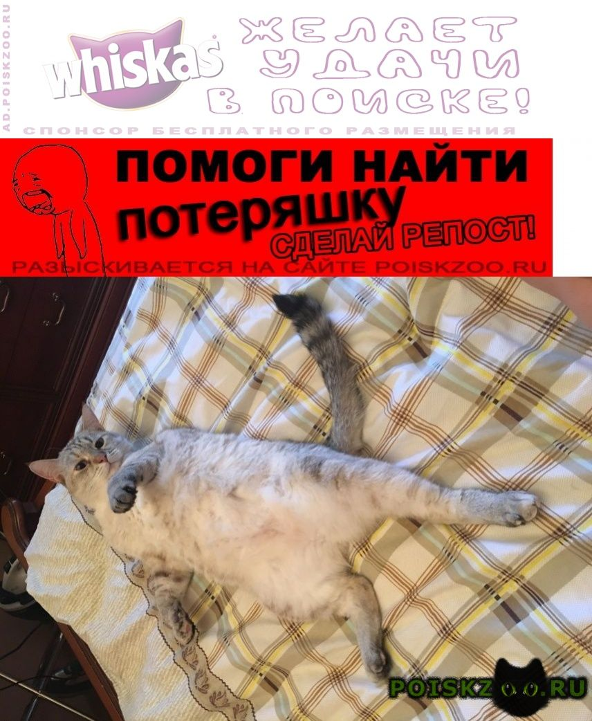 Пропала кошка лианозово г.Москва