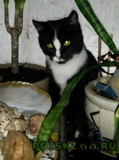 Пропала кошка черно-белая в е г.Королев