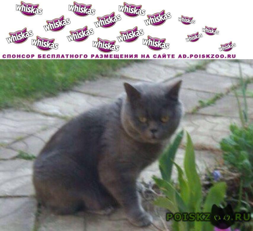 Пропал кот г.Жуков
