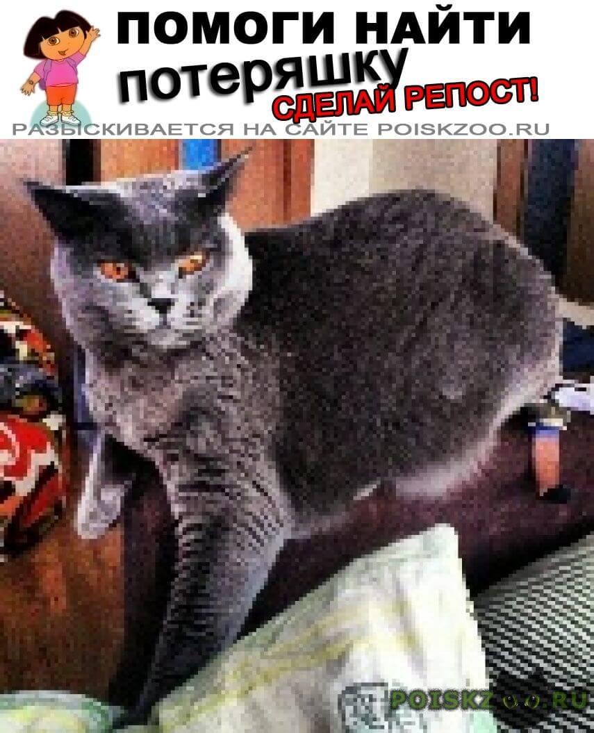 Пропала кошка нашедшему вознаграждение г.Красноармейск (Московская обл.)