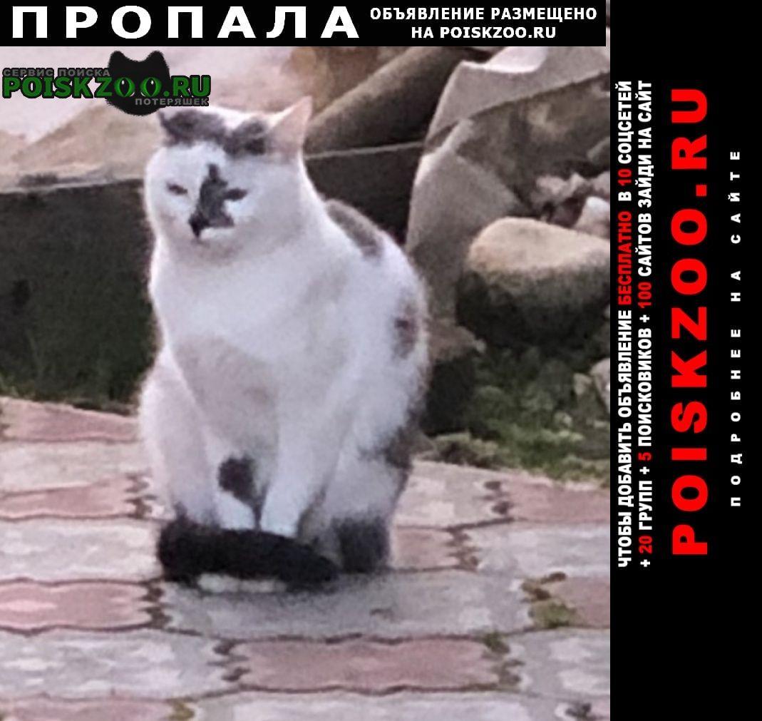 Пропала кошка кнопа г.Волоколамск