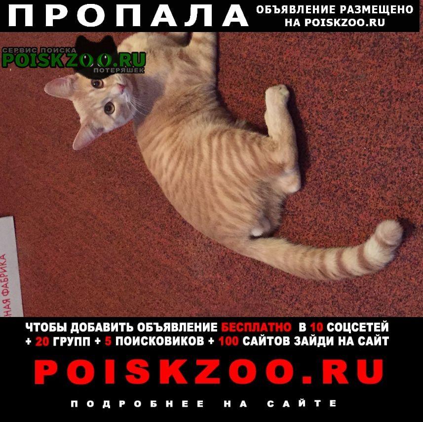 Пропала кошка рыжий красавец Ярославль