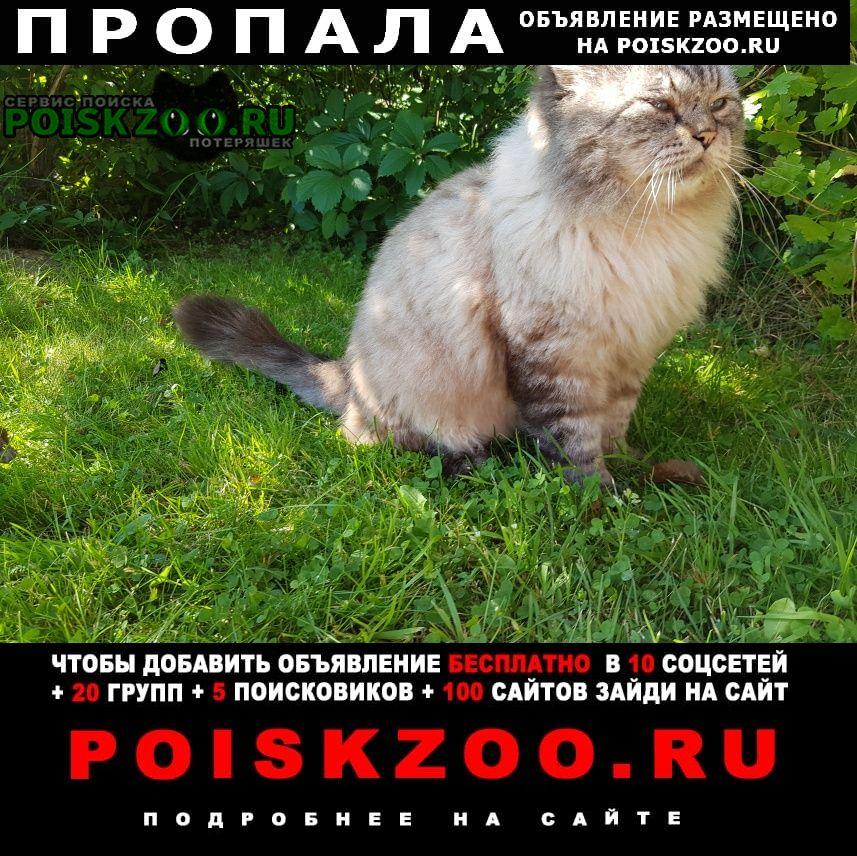 Пропала кошка кот Киржач