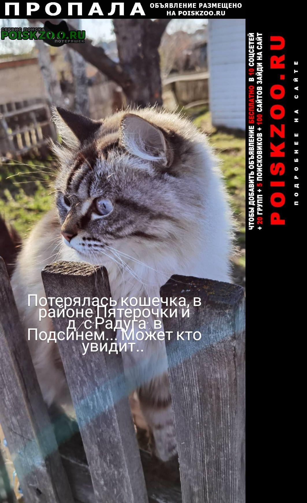 Пропала кошка помогите Абакан Хакасия