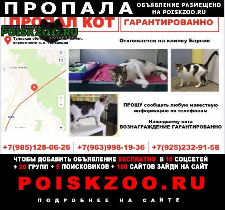 Заокский Пропал кот пожалуйста помогите найти
