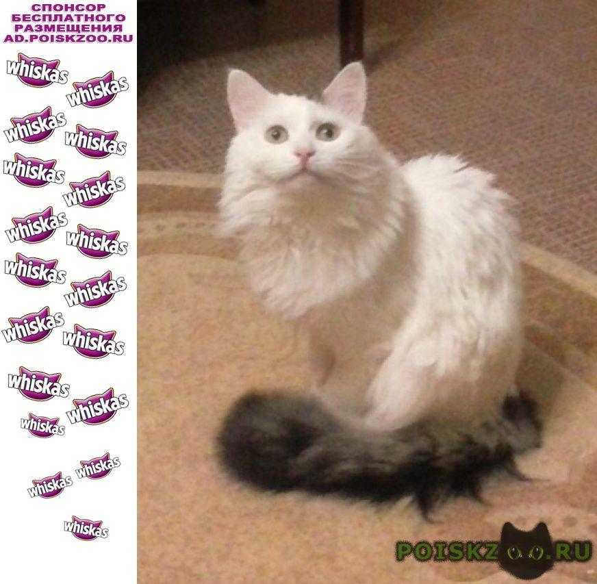 Пропал кот мурик г.Саранск