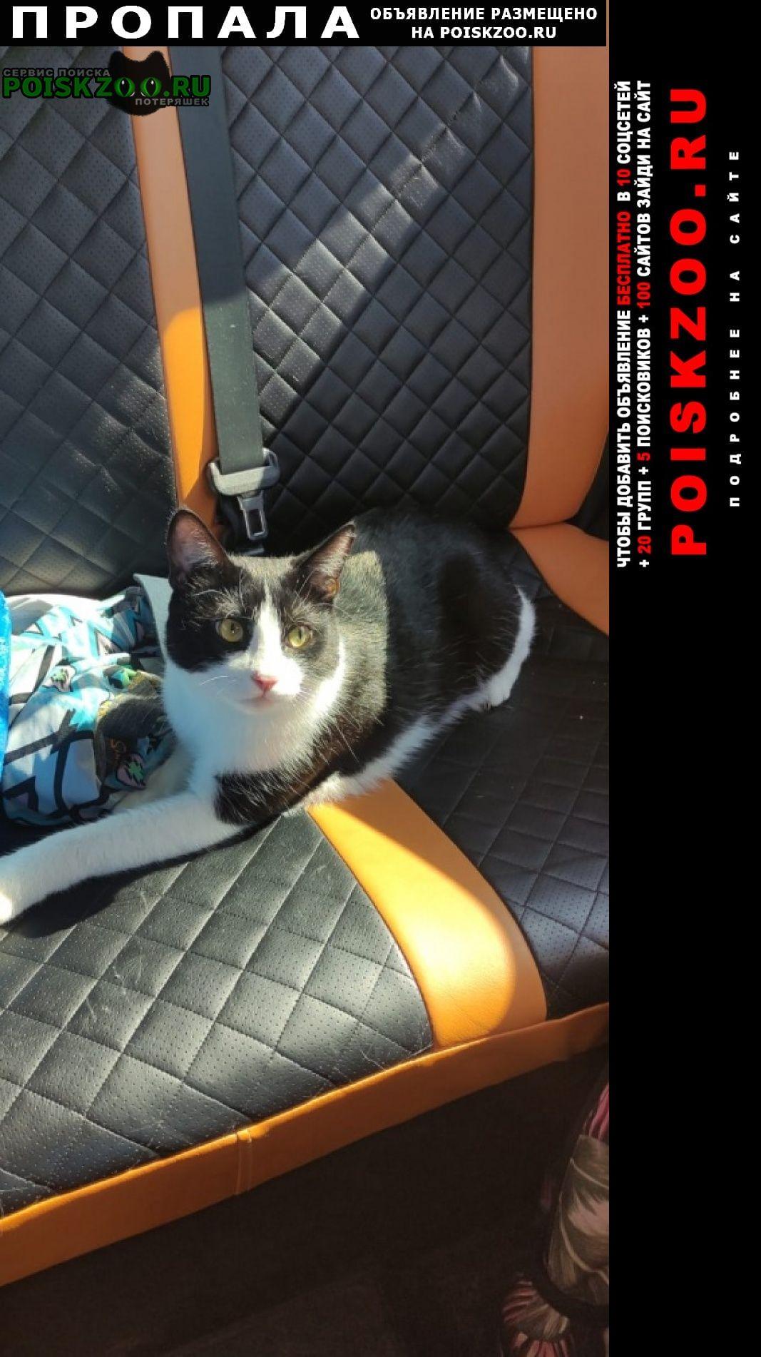 Пропал кот черно-белого окраса Деденево