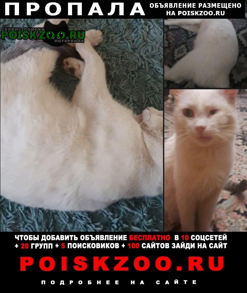 Пропал кот Новотроицк