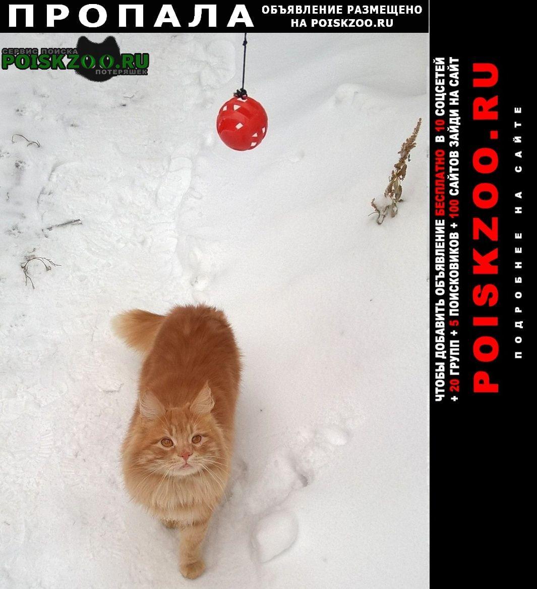 Пропала кошка котик чуня Ростов-на-Дону