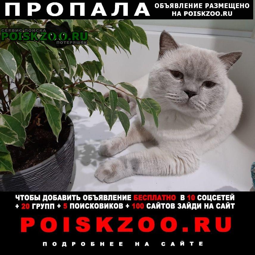 Чита Пропала кошка срочно