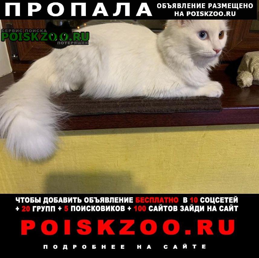 Пропала кошка глухая Москва