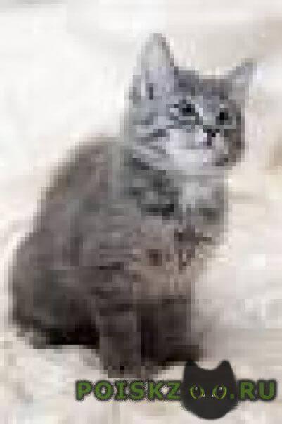 Пропала кошка помогите найти г.Ижевск