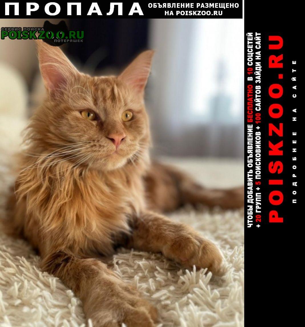 Екатеринбург Пропала кошка порода мейн кун