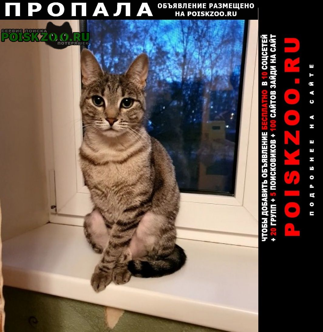 Пропала кошка в деревне сорокино г.Талдом