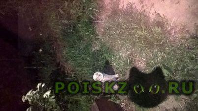 Пропала кошка кот г.Кострома