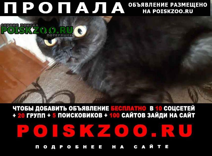 Пропала кошка Бор