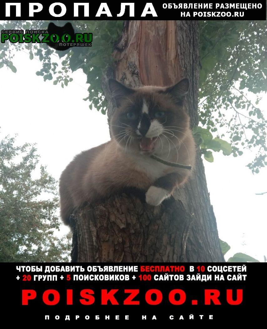 Пропала кошка срочно   Курган