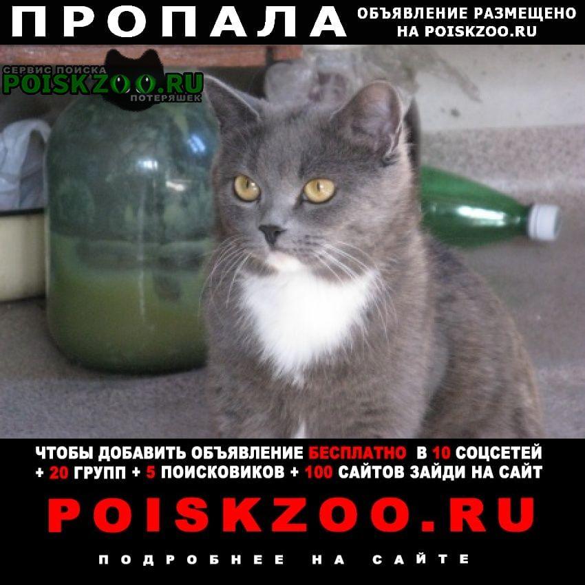 Пропала кошка помогите найти кошку Казань