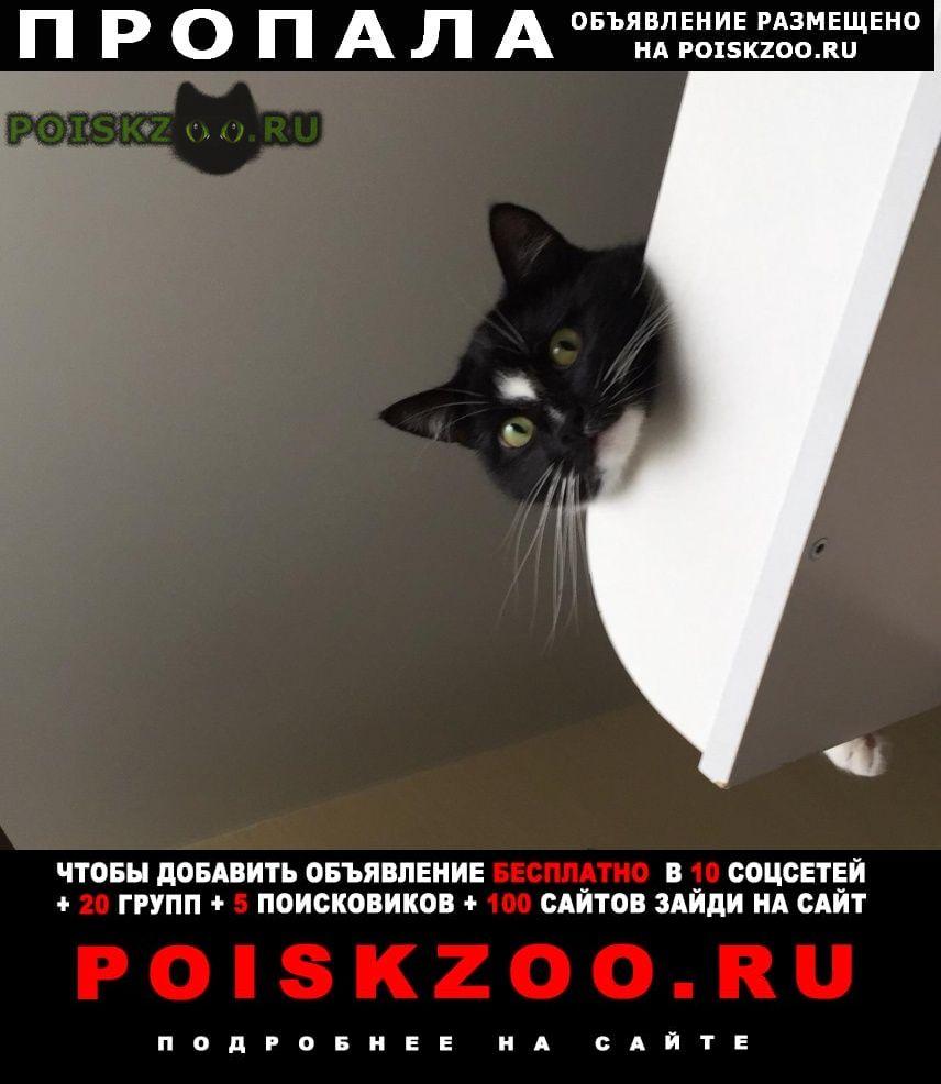 Пропала кошка потерялась Новосибирск