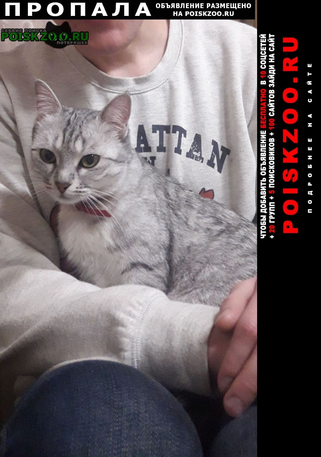 Пропала кошка поселок российский г.Краснодар