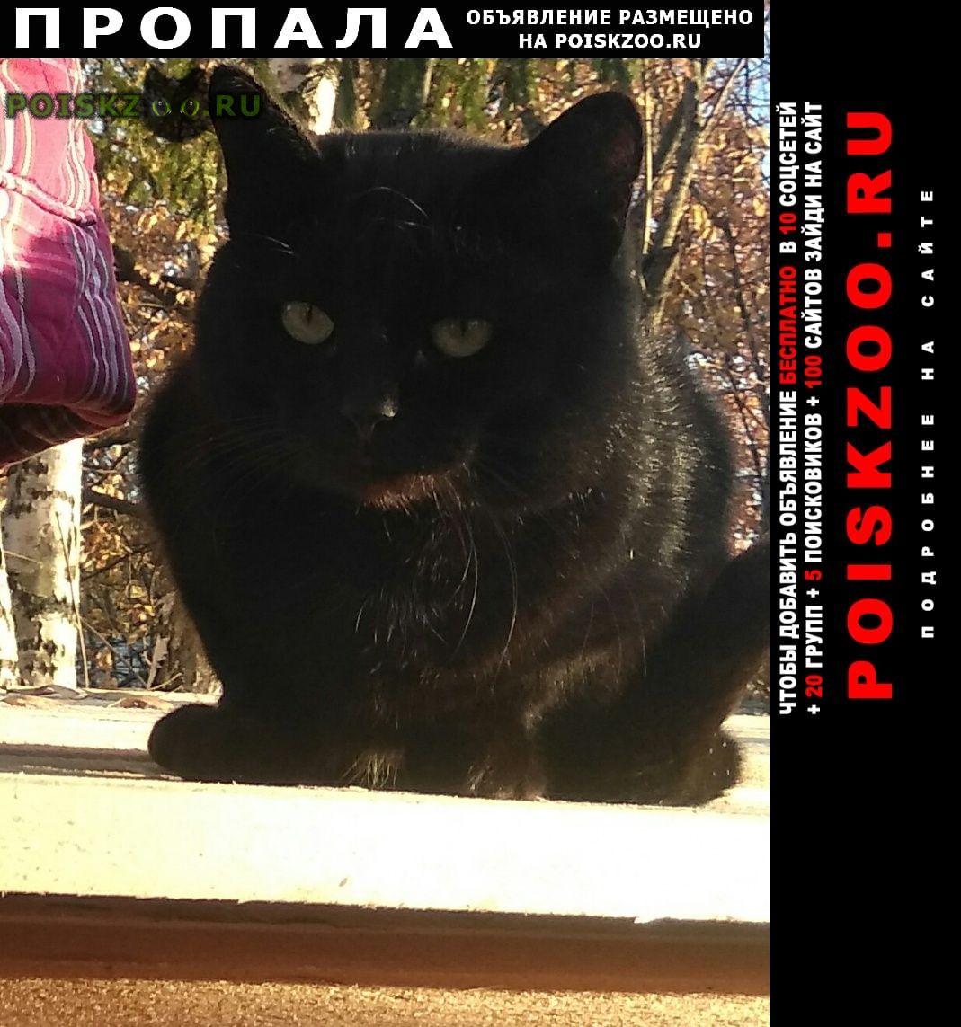 Пропал кот черный г.Ярославль
