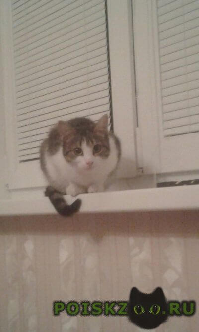 Пропала кошка срочно г.Королев