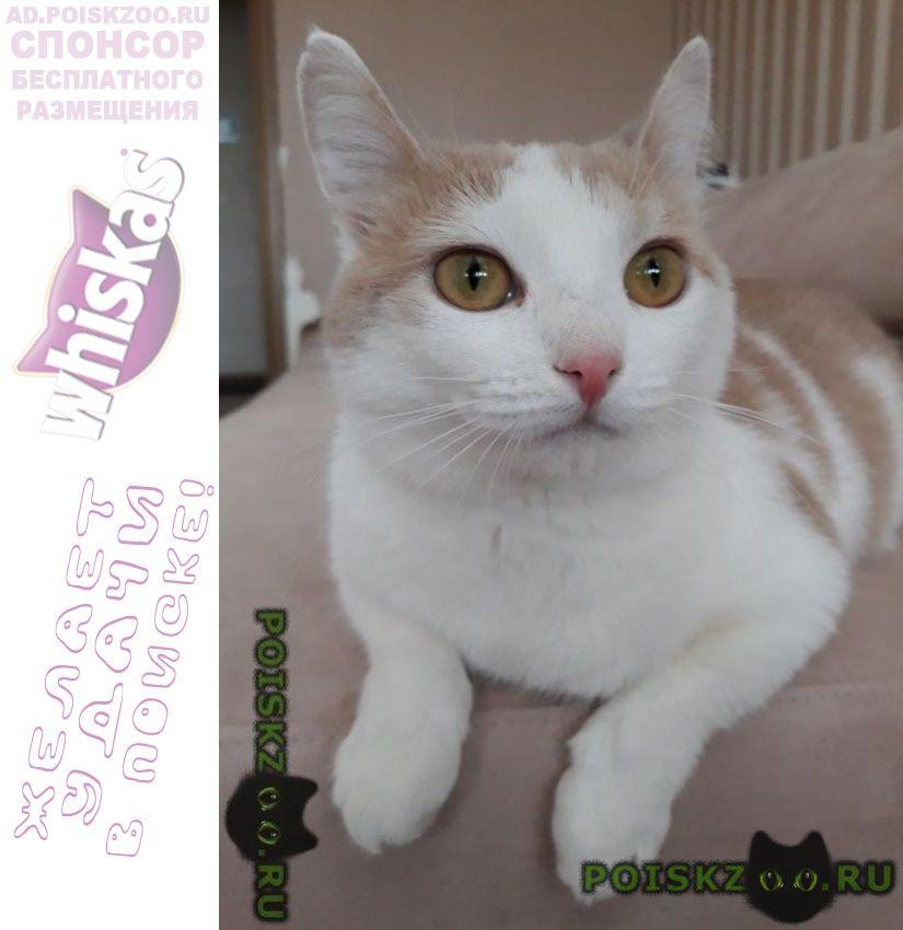 Пропала кошка рыже белого окраса г.Домодедово