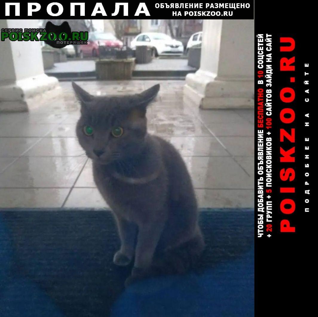 Пропала кошка помогите пожалуйста найти Феодосия