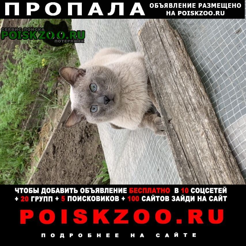 Пропал кот Лесосибирск