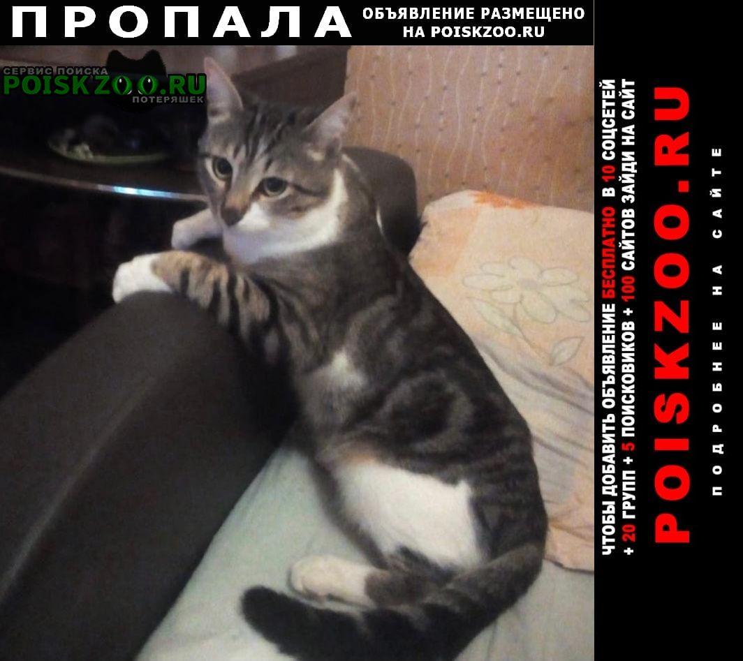 Пропал кот Пушкино