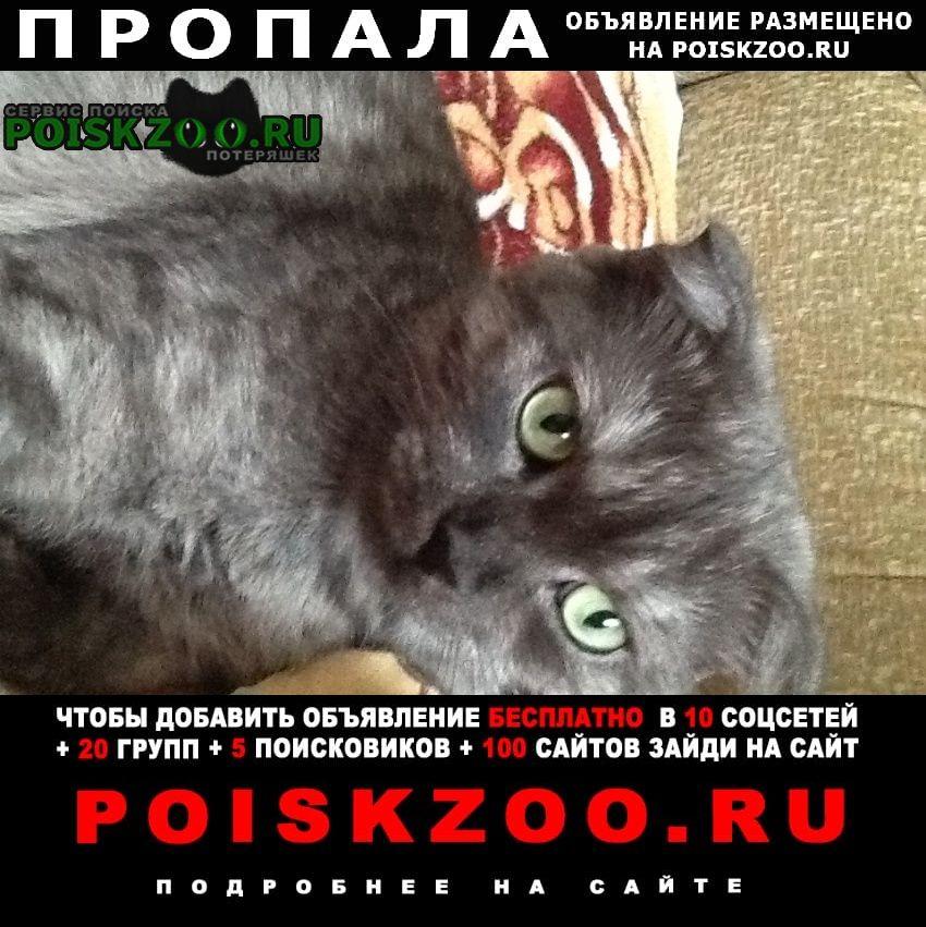 Краснодар Пропала кошка любимая по имени мятка