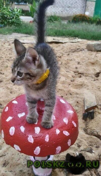 Пропала кошка г.Волгоград