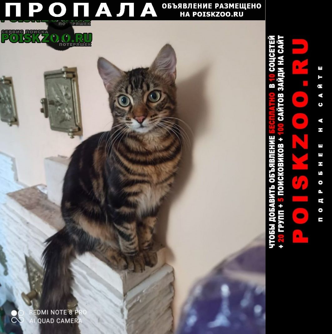 Пропал кот вениамин (веня) Ростов-на-Дону