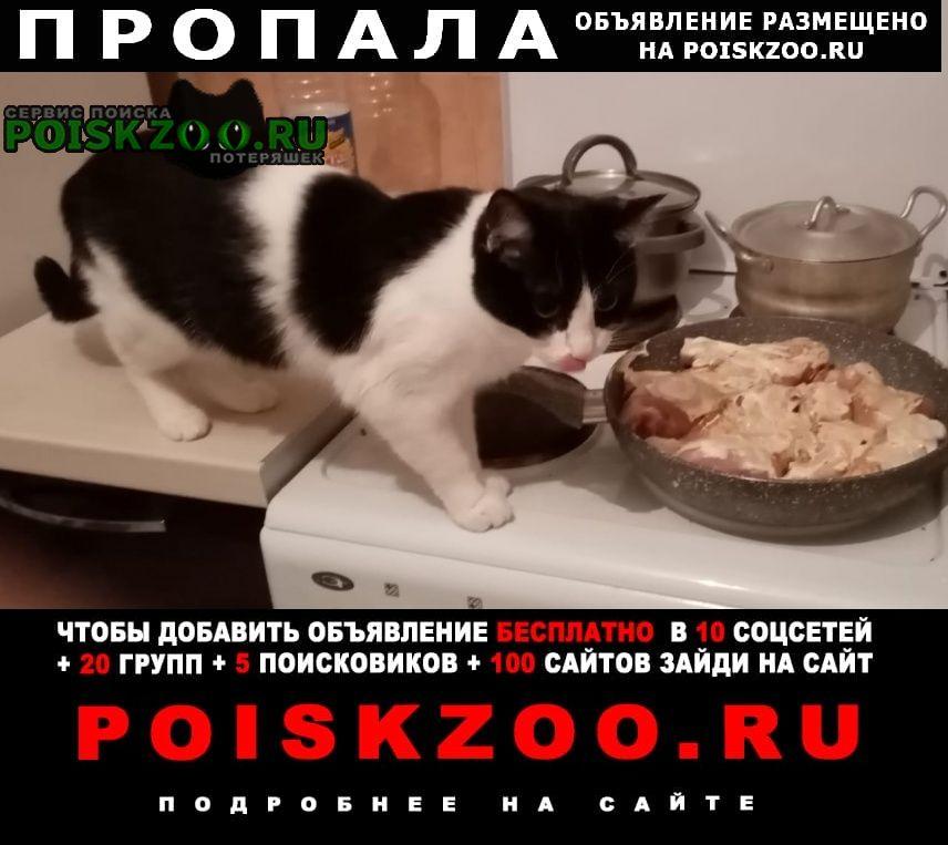 Пропала кошка, Москва