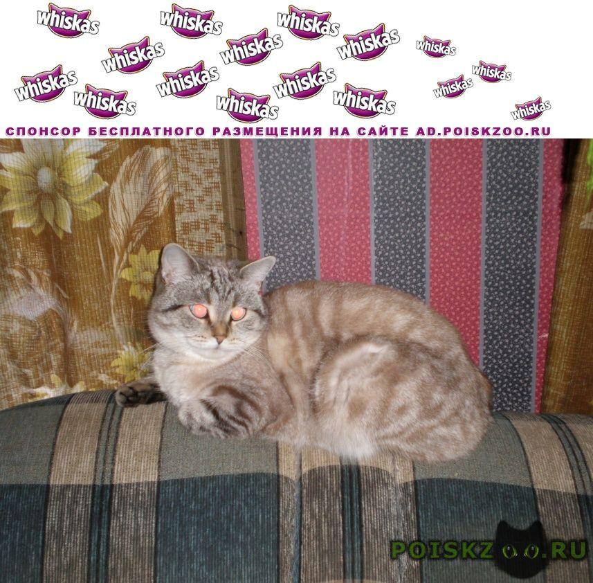 Пропала кошка кличка пуся г.Воскресенск