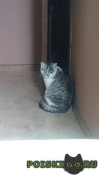Пропал кот г.Климовск