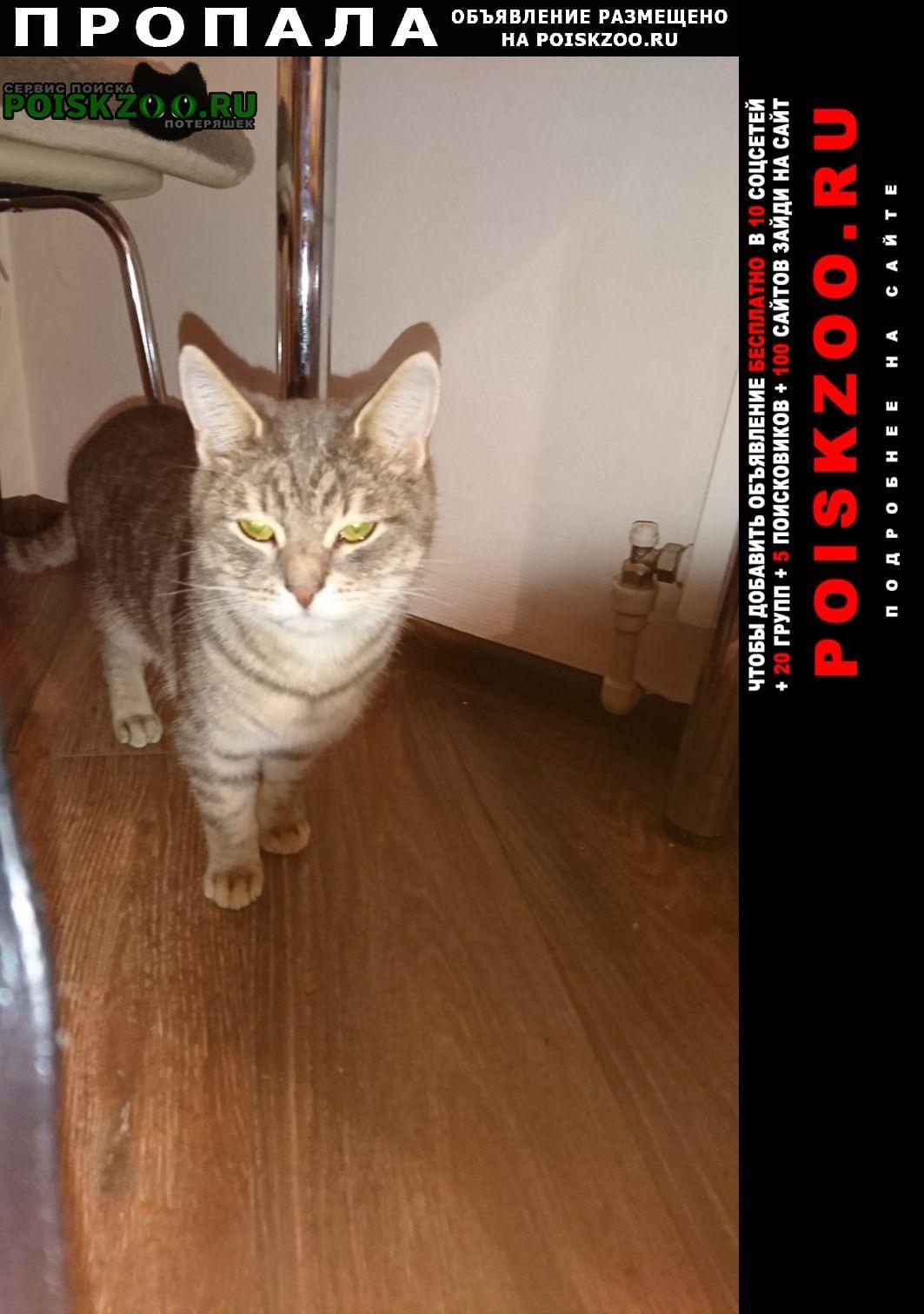 Пропала кошка кот Петушки