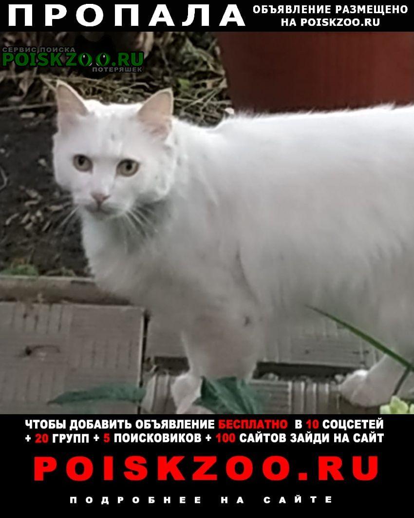 Пропала кошка кот кастрированный, неконтактный, Тамбов