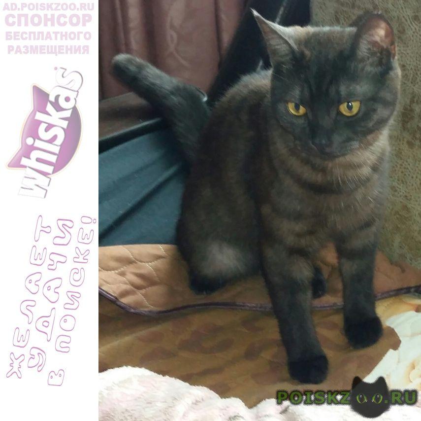 Пропала кошка помогите   г.Пятигорск