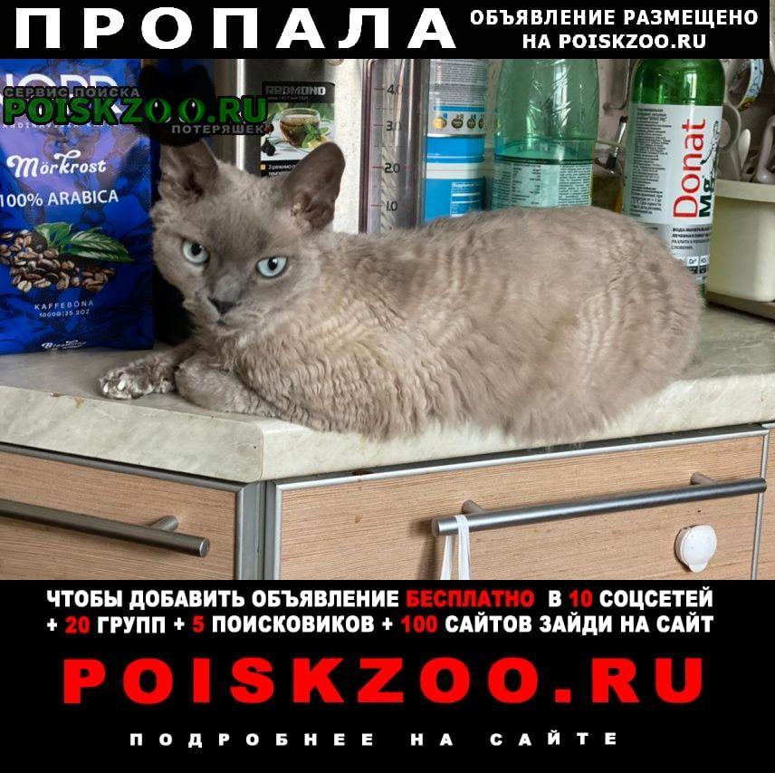 Пропал кот в районе метро говорово Москва