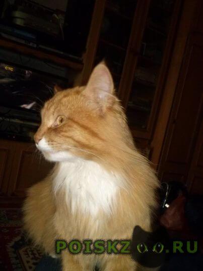 Пропал кот рыжий г.Симферополь