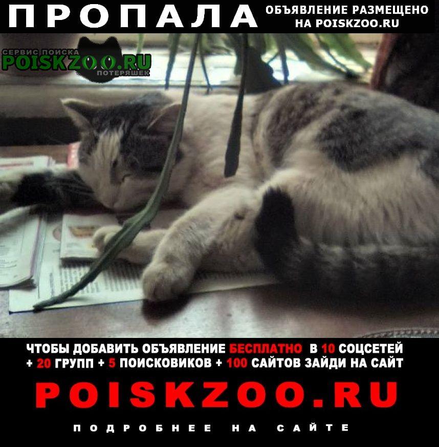 Орехово-Зуево Пропал кот на ул. пушкина, д.10