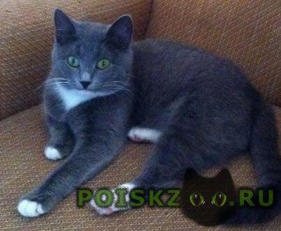 Пропала кошка г.Москва