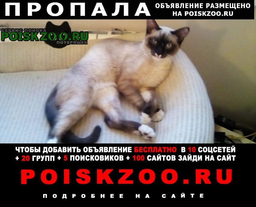 Пропал кот сиамский г.Томск