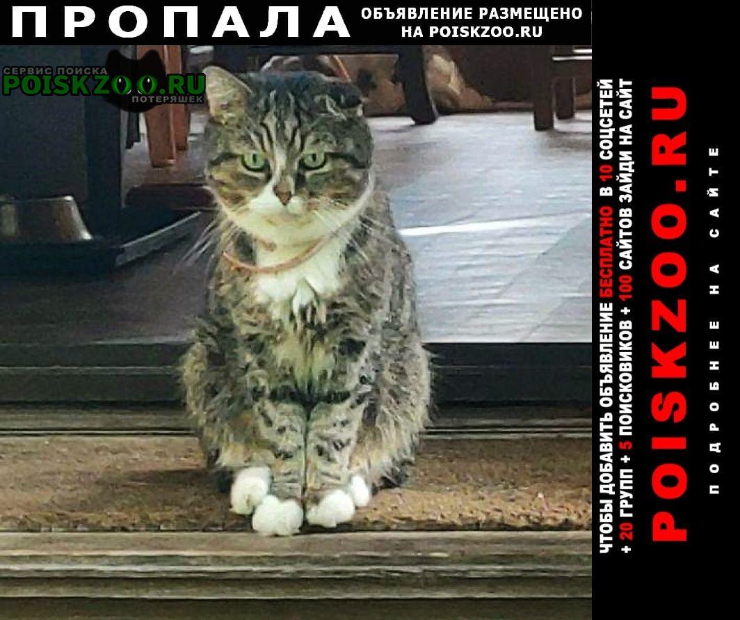 Пропала кошка кот. снт лесовод Солнечногорск